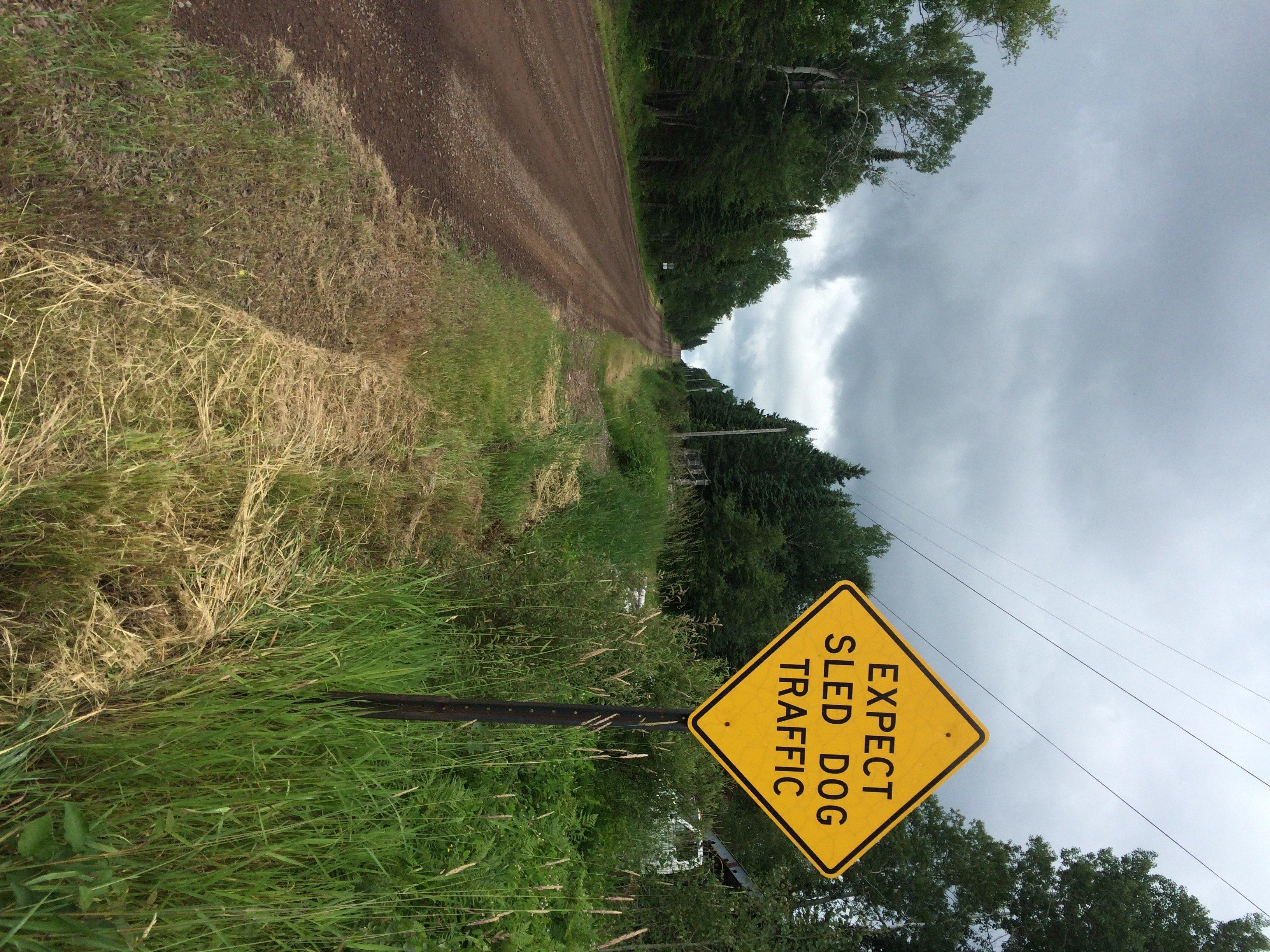dog sledding sign